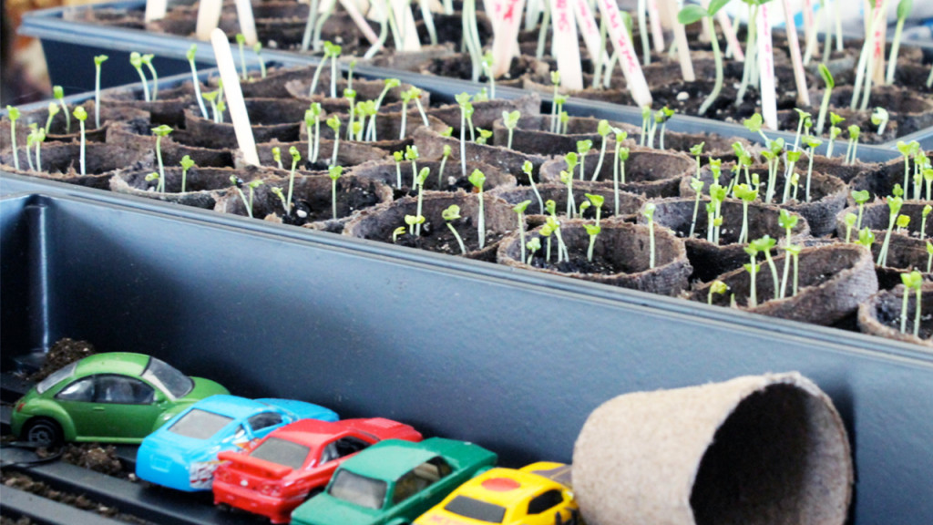plant pots with sprouts next to a row of toy cars